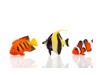 peixes e aquários
