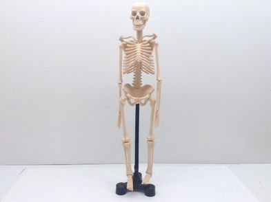 otros juegos y juguetes otros esqueleto